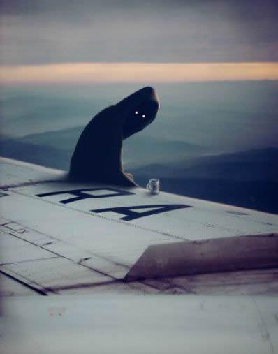[飞机上看到了鬼魂